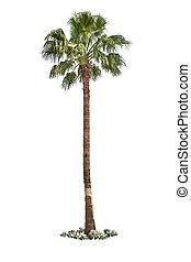 håndflade træ