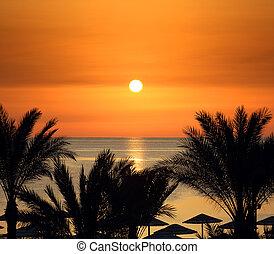 håndflader, og, solopgang, hen, hav