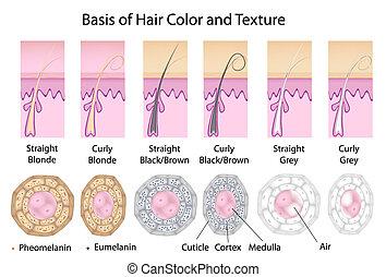 hår färga, olik, struktur