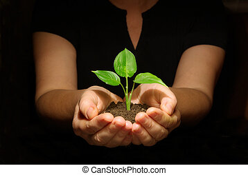 hænder, holde, kimplante