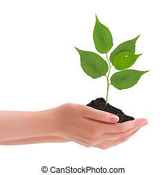 hænder, holde, ung plante