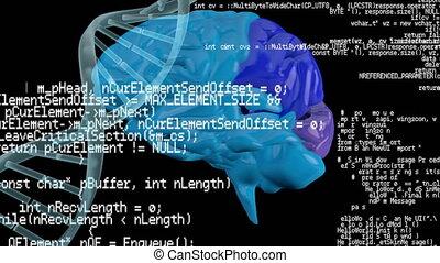 hélix, cerveau, programme, codes, adn