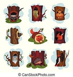 hérisson, mignon, vieux, écureuil, séance, ensemble, animaux, intérieur, renard, hibou, creux, vecteur, pic, arbres, hollowed, illustrations, raton laveur, dessin animé, oiseaux, dehors