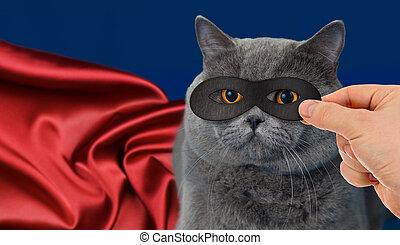 héroe super, gato