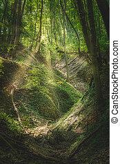 hêtre, printemps, forêt