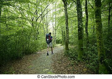 hêtre, pyrénées, aventure, randonnée, forêt