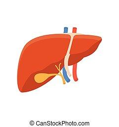 hígado, humano, icono
