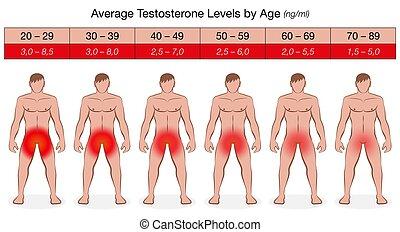 hím, diagram, hormon, testosterone, egyszintű