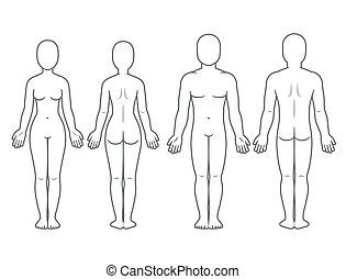 hím női, test, elülső, és, hát