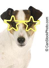 híres, kutya