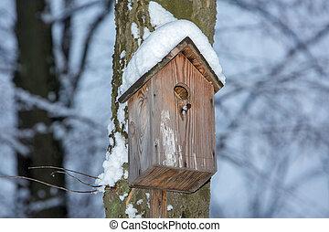 hó, fa tél, birdhouse, függő