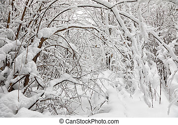 hó megtesz fa, alatt, a, tél, erdő