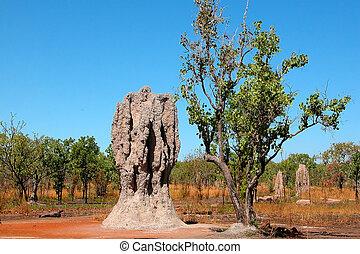hög, australien, termit
