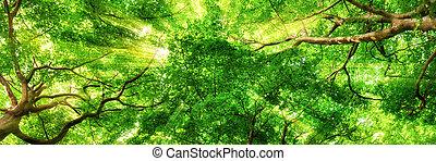 hög, treetops, genom, sunrays, lysande
