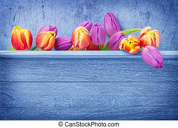 hölzern, tulpen, hintergrund