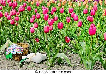 hölzern, tulpenblüte, schuhe, kleingarten