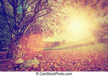 höst, årgång, leaves., träd., genom, falla, sol, landskap,...