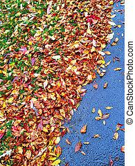 höst, bladen, färgrik
