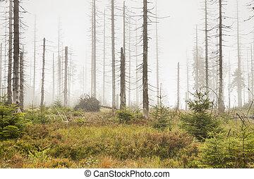 höst, dimmig dag