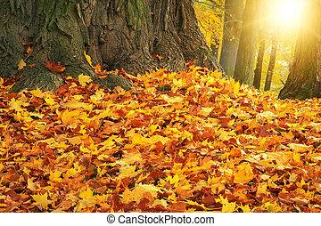 höst, färger, med, sol lätta, i park