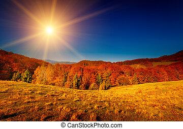 höst, färgrik, landskap