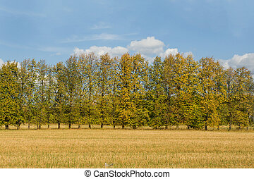 höst, gärde med träd, sky, med, clouds., a, fri, och, fridfull, day.