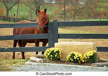 höst, häst