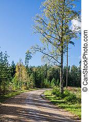 höst, land, skog, väg, estland