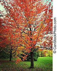 höst landskap, med, färgrik, träd
