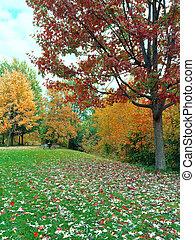 höst landskap, med, grön gräsmatta, och, färgrik, träd