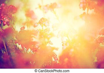 höst, ljung, äng, sol, falla, settng, blomningen, lysande
