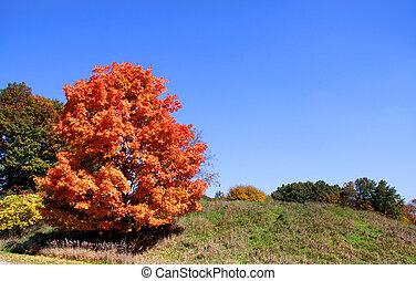 höst, lysande, träd