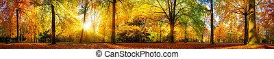 höst, panorama, skog, underbar