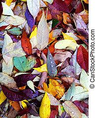 höst, Regndroppar, bladen, färgrik