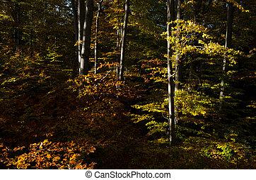 höst träd, in, den, skog