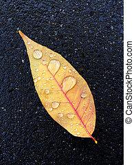 höstlöv, med, regndroppar