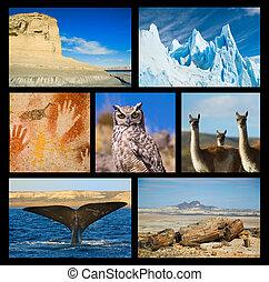 højdepunkter, samling, one., patagonia