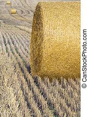 høst, crop