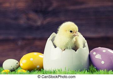 húsvét, csirke ikra
