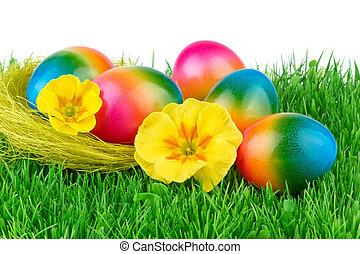 húsvét, elpirul pete, képben látható, a, zöld fű