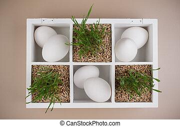 húsvét, eredet, dekoráció, noha, fű, és, fehér, ikra