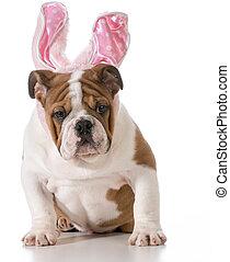 húsvét, kutya