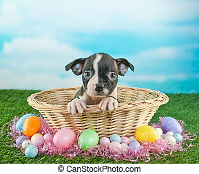 húsvét, kutyus