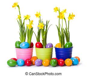 húsvét, noha, nárciszok, és, színes, festett, ikra