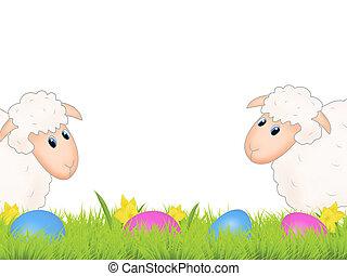 húsvét, sheep