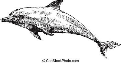 húzott, delfin, kéz