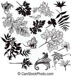 húzott, leafs.eps, vektor, gyűjtés, kéz