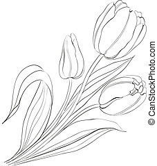 húzott, tulips., kéz