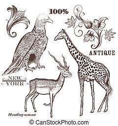 húzott, vektor, állatok, gyűjtés, kéz