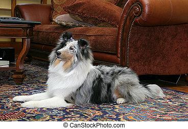 hübsch, hund, in, wohnzimmer
